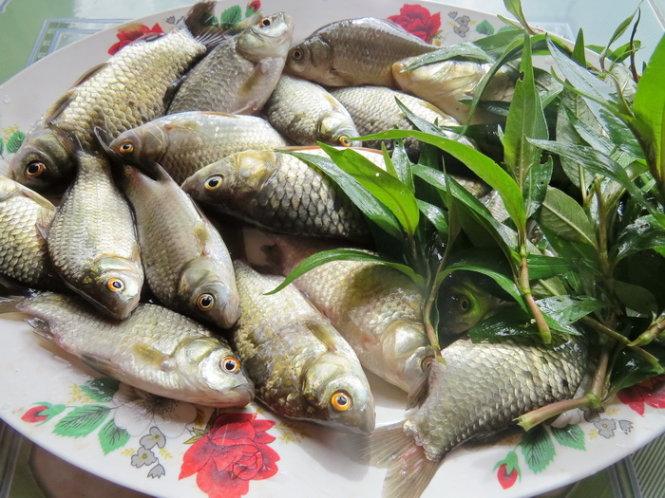 Kết quả hình ảnh cho cá diếc hầm nấm